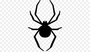 دوربری عنکبوت