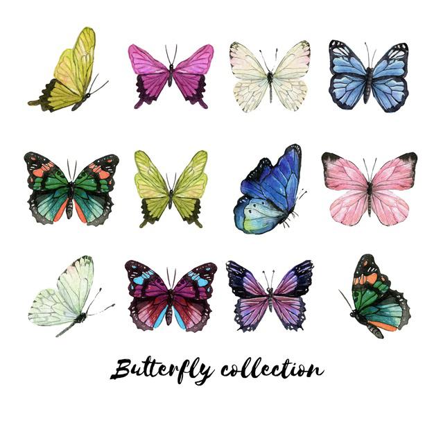 وکتور آماده مجموعه پروانه های زیبا و رنگارنگ
