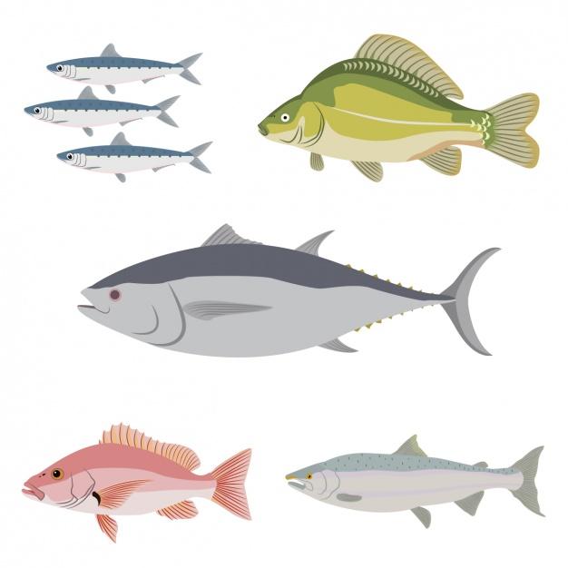 وکتور آماده مجموعه ماهی های مختلف