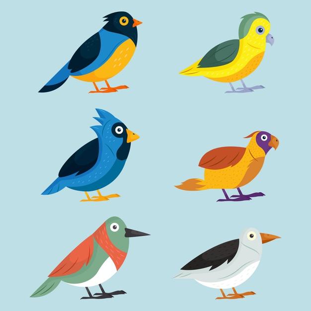 وکتور آماده مجموعه طراحی پرنده های مختلف