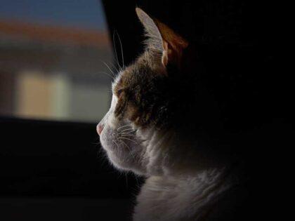 عکس استوک گربه پشت شیشه
