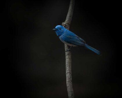 عکس استوک پرنده بالای شاخه