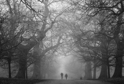 عکس استوک سیاه سفید راه رفتن دو نفره در جنگل